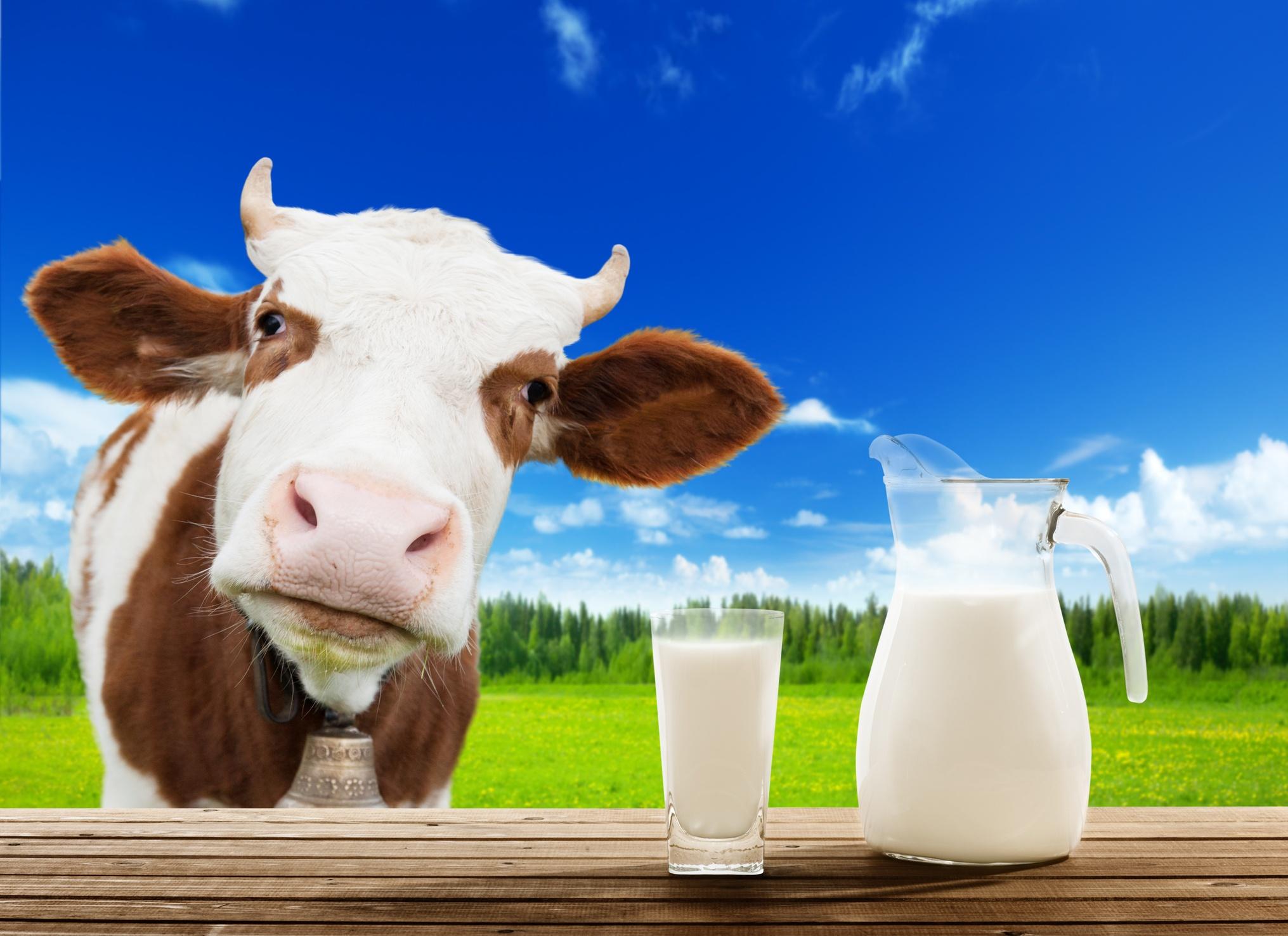 CowsMilk.jpg