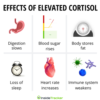 Effects of high cortisol levels