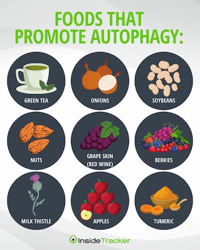 Foods that promote autophagy