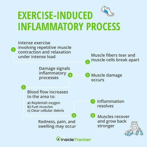 The connection between inflammation and exercise