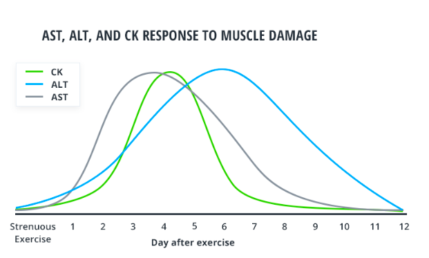 liver enzymes muscle damage exercise