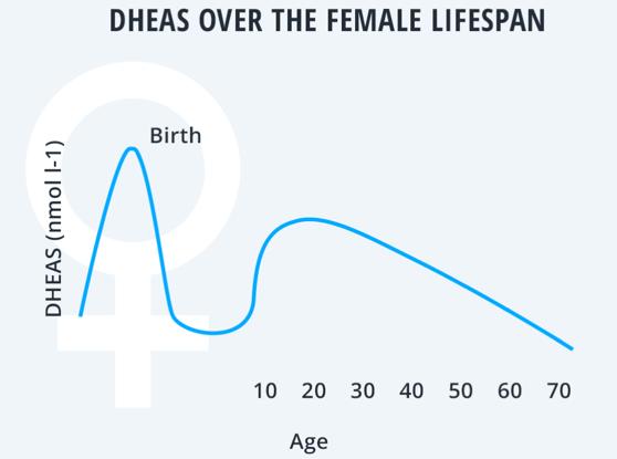DHEAS over the female lifespan
