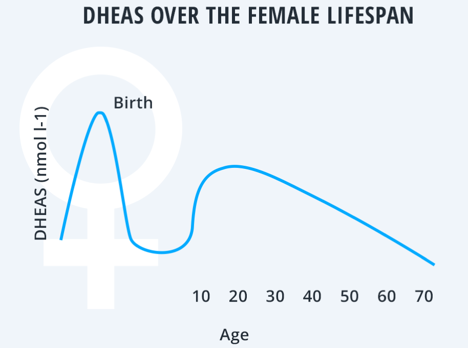 DHEAS over the female lifespan