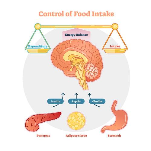 energy expentidure balance hormones hunger
