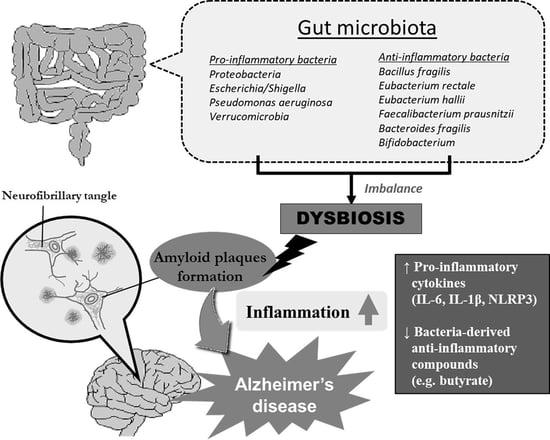 gut health inflammation alzheimers amyloid plaques