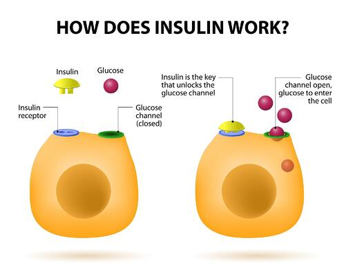 insulin action-1